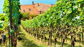 Шале и Sw Lavaux Oron тропы террас виноградника Lavaux Стоковое Изображение