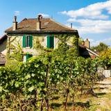 Шале на тропе Lavaux Oron Swit террас виноградника Lavaux Стоковая Фотография