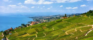 Шале около тропы террасы виноградника Lavaux в Швейцарии Стоковое Изображение RF