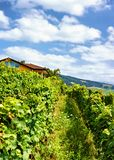 Шале около тропы Lavaux Oron Швейцарии террас виноградника Lavaux Стоковые Фото