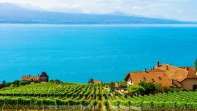 Шале приближают к тропе террасы виноградника Lavaux в Switzerl Стоковая Фотография RF