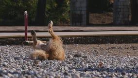 Шаловливая бездомная собака кладя на Pebble Beach стоковая фотография