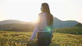 Шаловливая девушка штриховать листья кустов чая на плантации, поворачивая к камере акции видеоматериалы