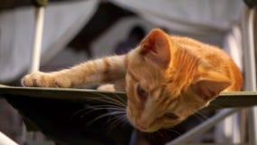 Шаловливый котенок имбиря лежит в стуле на улице сток-видео