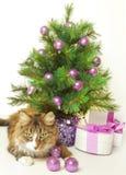 Шаловливый кот стоковое фото rf