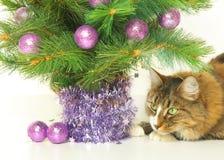 Шаловливый кот стоковые изображения rf