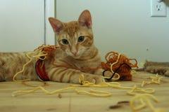Шаловливый счастливый котенок в пуке пряжи стоковое фото rf