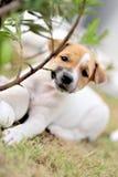 шаловливый щенок Стоковые Фото
