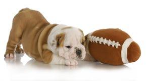 Шаловливый щенок Стоковое Фото