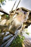 шальная лошадь Стоковое Изображение