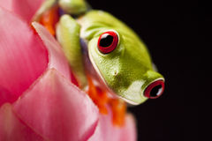 шальная лягушка стоковое фото rf