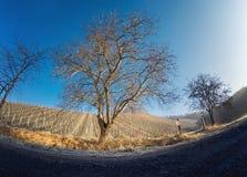 Шальной взгляд виноградника на солнечный день Стоковое Фото