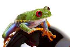 шальной зеленый цвет лягушки Стоковое Изображение