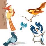 шарж птиц Стоковые Изображения RF