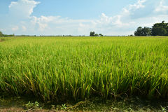 шарж fields зеленый тип иллюстрации Стоковые Изображения RF