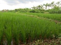 шарж fields зеленый тип иллюстрации Стоковое Фото