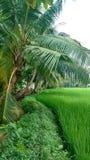 шарж fields зеленый тип иллюстрации Стоковые Изображения