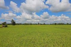 шарж fields зеленый тип иллюстрации Стоковое фото RF