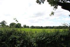 шарж fields зеленый тип иллюстрации Стоковое Изображение
