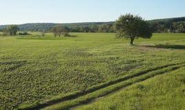 шарж fields зеленый тип иллюстрации Стоковое Изображение RF