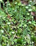 Шарики воды на крошечных черенок зеленого растения Стоковое фото RF