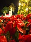 Шарики золота рождества с светом стоковые фотографии rf