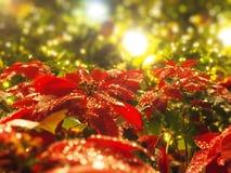 Шарики золота рождества с светом стоковая фотография rf