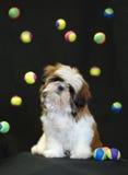 шарики играя щенка Стоковые Фото