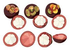 Шарики мангустана и шарик мангустана половинный для еды красивого цвета иллюстрация штока