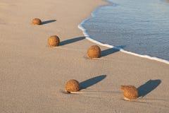 Шарики морской водоросли Нептуна на пляже Стоковые Изображения