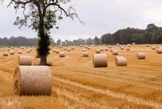 Шарики сена на поле Стоковая Фотография