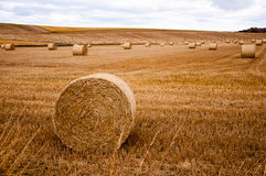 Шарики сена на поле Стоковые Фото