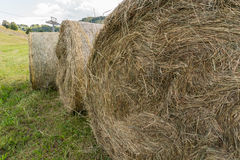 Шарики сена Стоковые Изображения RF