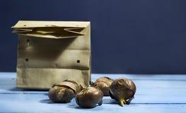 Шарики тюльпана голубая деревянная предпосылка Стоковые Фото