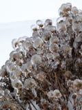 Шарики льда Стоковая Фотография RF