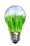 шарик внутри светлого лета лужка Стоковое Фото