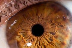 Шарик глаза крупного плана макроса Стоковая Фотография RF