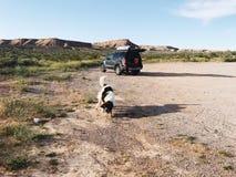 шарик гоня собаку Стоковая Фотография RF