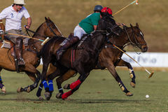 Шарик действия пониов игроков поло Стоковая Фотография RF