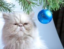 Шарик и белый кот Новый Год Стоковое Изображение