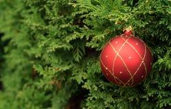Шарик рождества на дереве evegreen Стоковая Фотография