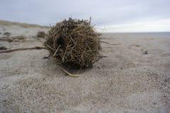 Шарик травы моря помытый вверх на пляже с тонами braun и песочной предпосылкой стоковая фотография rf