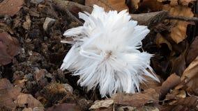 Шарик льда волос Стоковая Фотография RF