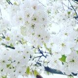 Шарм весны в Кашмире стоковое фото rf