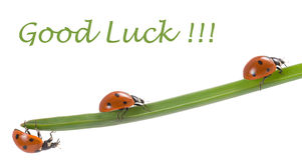 Шарм удачи Ladybug Стоковые Фотографии RF