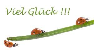 Шарм удачи Ladybug Стоковые Изображения