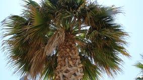 Шаровидная крона тропической ладони стоковая фотография rf