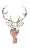 шарф оленей стоковое фото