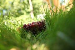 Шар вишни Стоковые Изображения