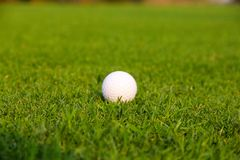 Шар для игры в гольф на зеленом цвете стоковые фотографии rf